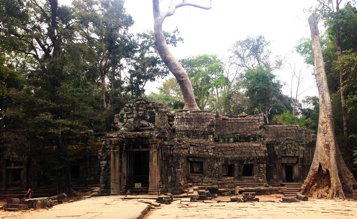 cambodia-tempel-trae